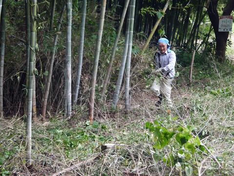 9・20伏尾インストラクターと神奈川県所有の竹林整備②_c0014967_1732291.jpg