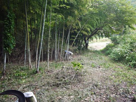 9・20伏尾インストラクターと神奈川県所有の竹林整備②_c0014967_17324187.jpg