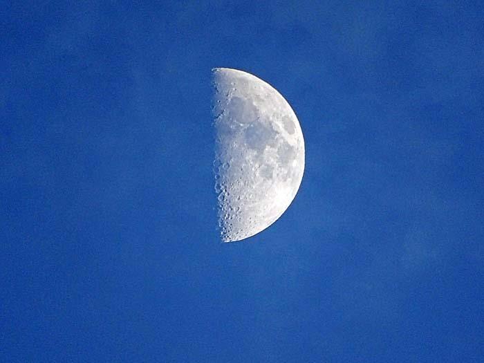 上弦の半月_e0016894_18084120.jpg
