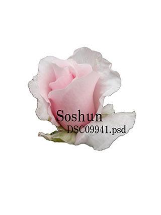 e0376329_23332570.jpg