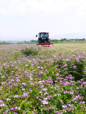 """砂田のこだわりれんげ米 順調に色づき始め頭を垂れてきています!今年は無農薬ではなく""""減農薬栽培""""です!_a0254656_20260013.jpg"""