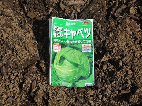 ニンニク発芽、春キャベツ種蒔き、大根のネット撤去9・25_c0014967_1202030.jpg