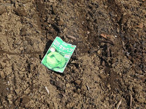 ニンニク発芽、春キャベツ種蒔き、大根のネット撤去9・25_c0014967_1203696.jpg
