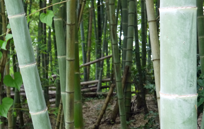 「孟宗1本、真竹は2本」県民参加の森林づくり事業で違い明確_c0014967_17382281.jpg