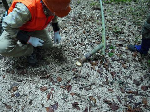 「孟宗1本、真竹は2本」県民参加の森林づくり事業で違い明確_c0014967_17393416.jpg