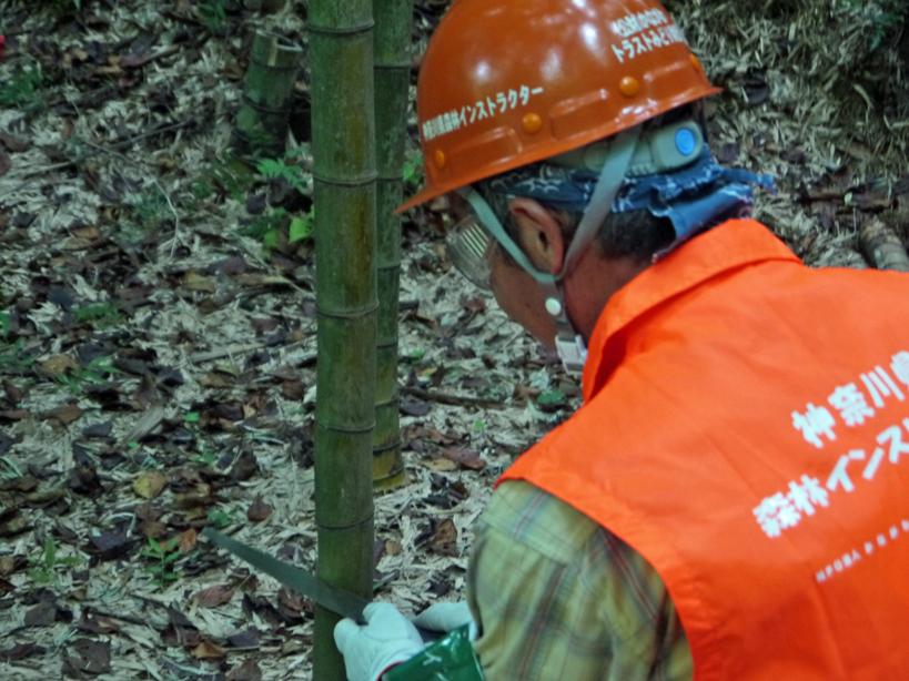 「孟宗1本、真竹は2本」県民参加の森林づくり事業で違い明確_c0014967_17394575.jpg