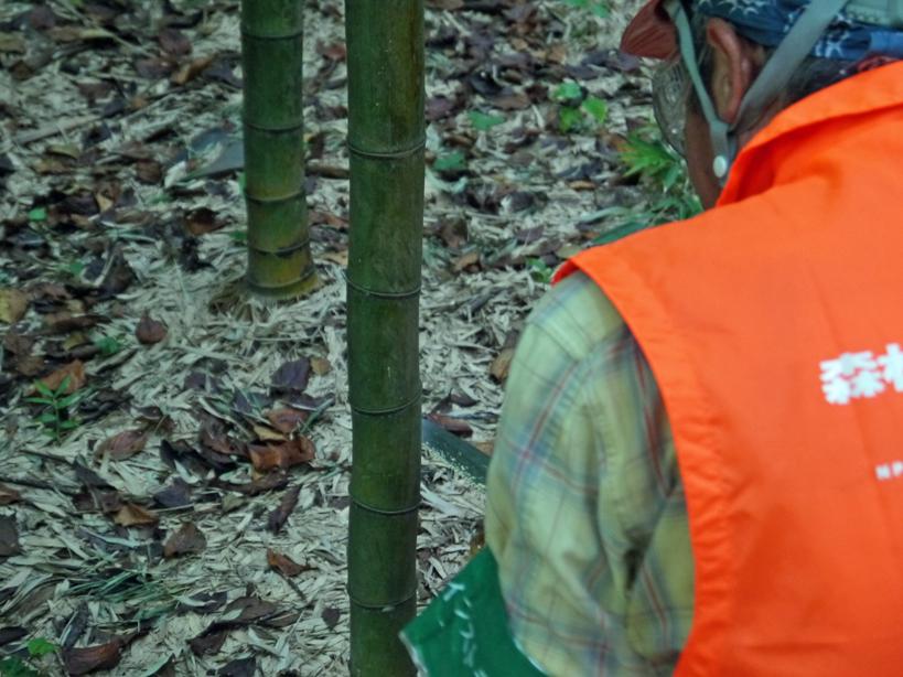 「孟宗1本、真竹は2本」県民参加の森林づくり事業で違い明確_c0014967_1740065.jpg