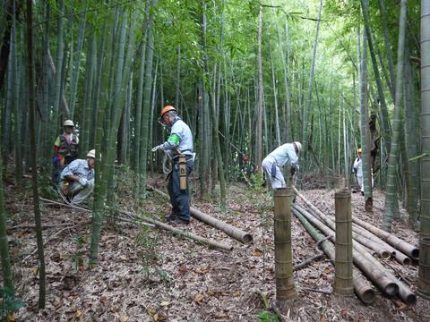 「孟宗1本、真竹は2本」県民参加の森林づくり事業で違い明確_c0014967_1741356.jpg