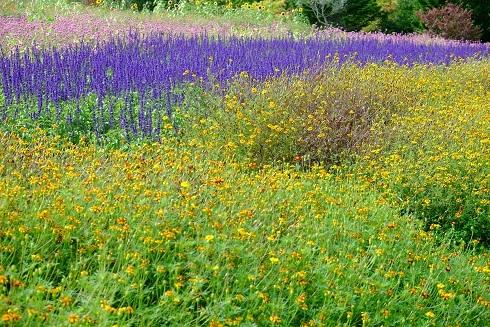 滝野すずらん丘陵公園の続きです。「コスモス以外の花たち」_f0362073_04361283.jpg