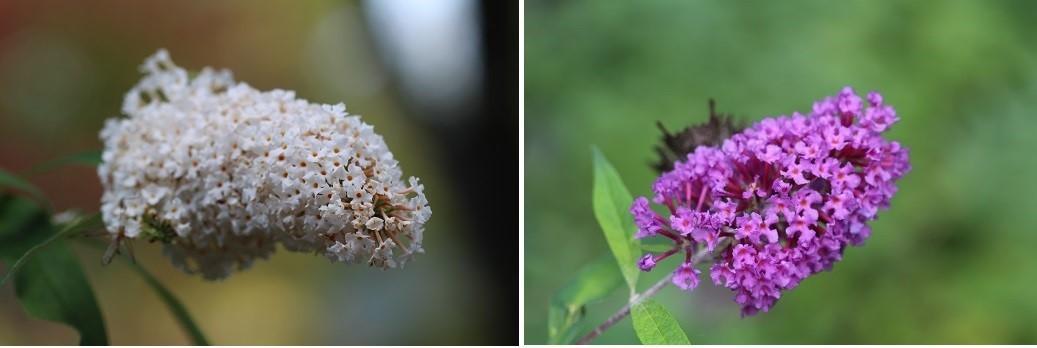 滝野すずらん丘陵公園の続きです。「コスモス以外の花たち」_f0362073_04371022.jpg