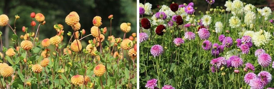 滝野すずらん丘陵公園の続きです。「コスモス以外の花たち」_f0362073_04380697.jpg
