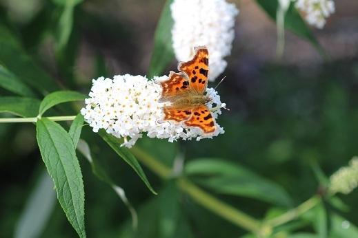 滝野すずらん丘陵公園の続きです。「コスモス以外の花たち」_f0362073_04384316.jpg