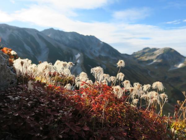 紅葉の立山 別山乗越から雷鳥沢_e0271890_19562654.jpg