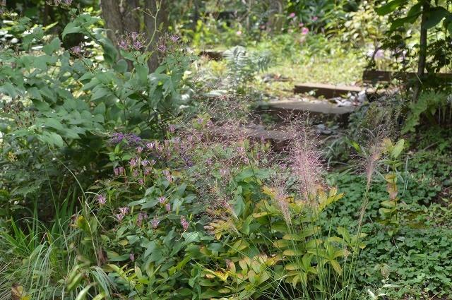 明日から10月! 9月30日の庭。_c0124100_16295133.jpg