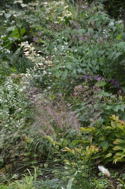 明日から10月! 9月30日の庭。_c0124100_16295891.jpg