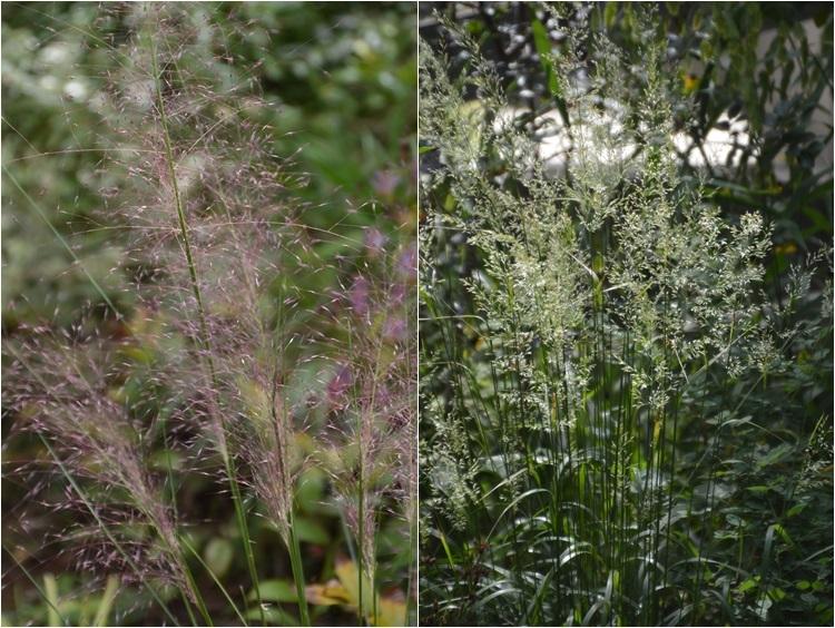 明日から10月! 9月30日の庭。_c0124100_16304323.jpg
