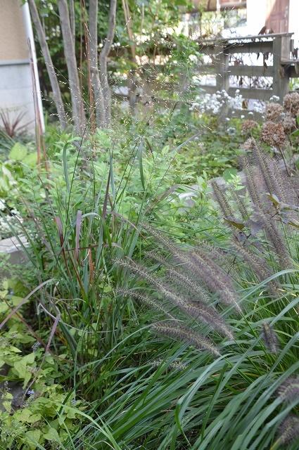 明日から10月! 9月30日の庭。_c0124100_16305106.jpg