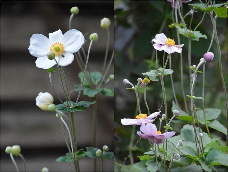 明日から10月! 9月30日の庭。_c0124100_16311860.jpg
