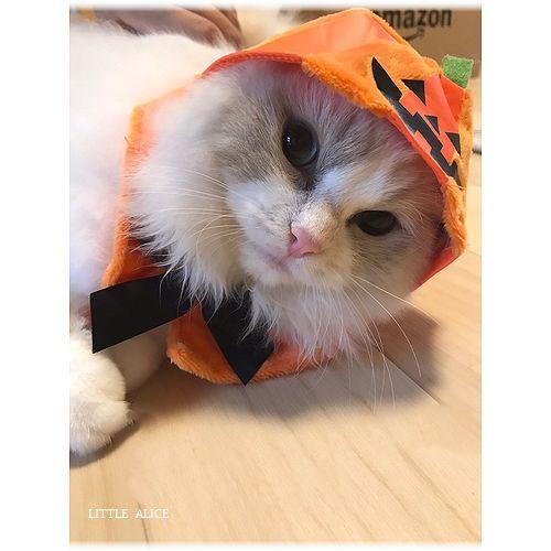 ☆かぼちゃゆらちゃんと仔猫たち。_c0080132_11225088.jpg
