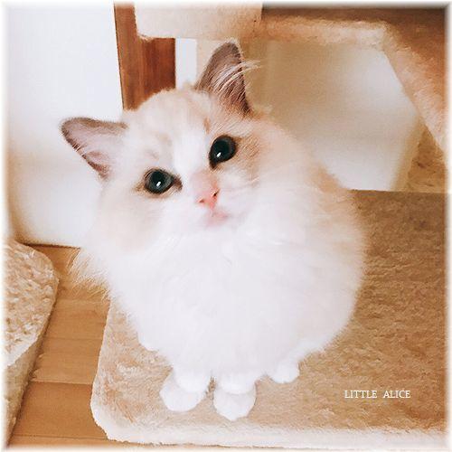 ☆かぼちゃゆらちゃんと仔猫たち。_c0080132_11243621.jpg