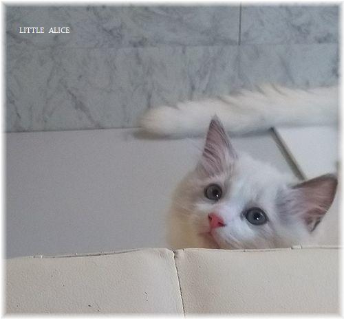 ☆かぼちゃゆらちゃんと仔猫たち。_c0080132_11343609.jpg