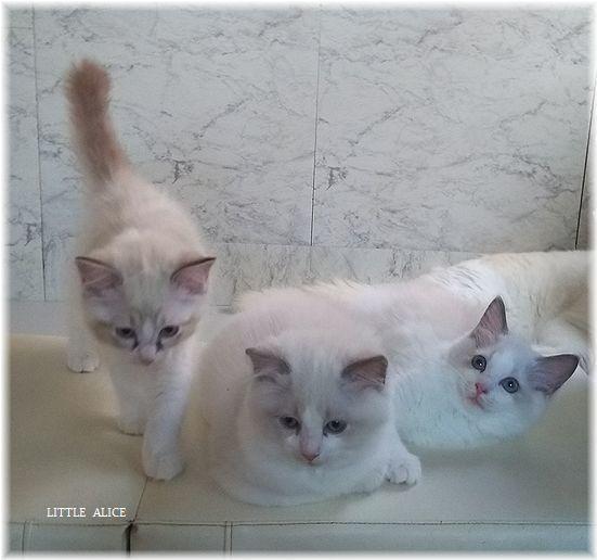 ☆かぼちゃゆらちゃんと仔猫たち。_c0080132_11400523.jpg