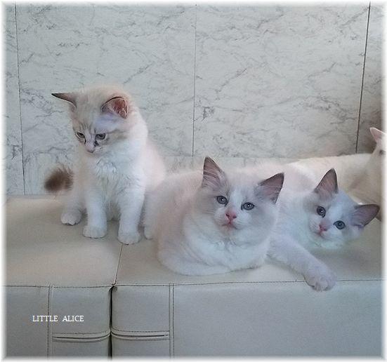 ☆かぼちゃゆらちゃんと仔猫たち。_c0080132_11405266.jpg
