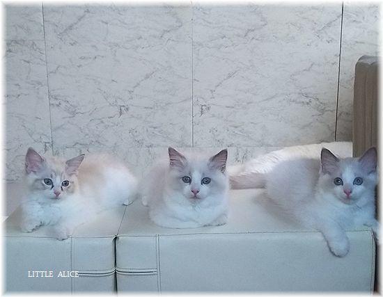 ☆かぼちゃゆらちゃんと仔猫たち。_c0080132_11444937.jpg