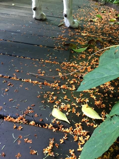 Fine autumn day サージュとピクニック♪_a0165160_10493046.jpg