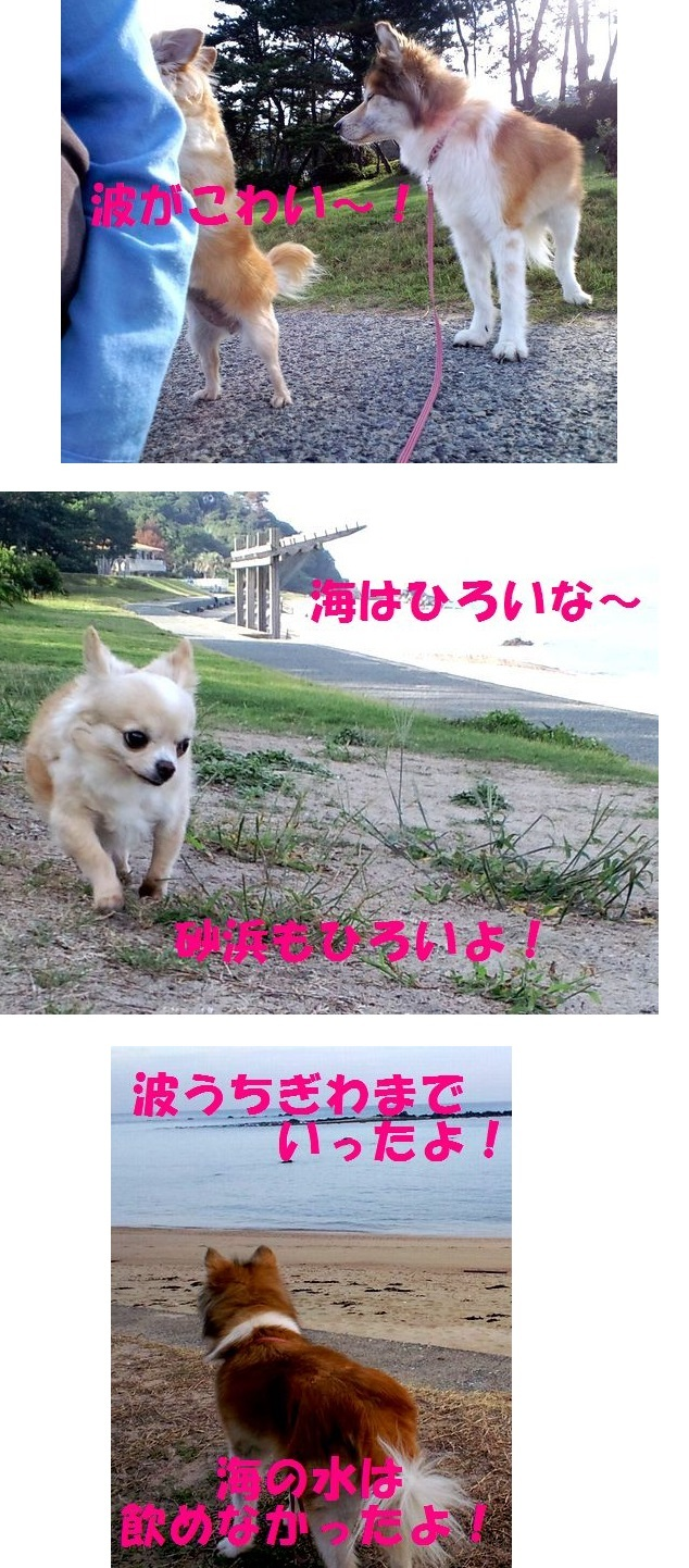 c0025171_11581647.jpg