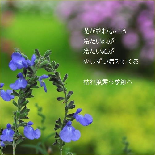 b0154475_23593919.jpg
