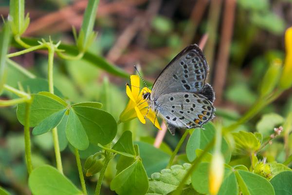 9月に写した蝶の写真_d0001300_21582608.jpg