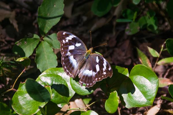 9月に写した蝶の写真_d0001300_21593887.jpg