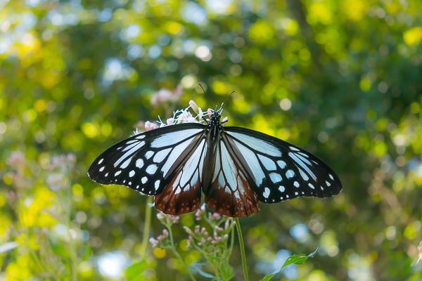 9月に写した蝶の写真_d0001300_22015430.jpg