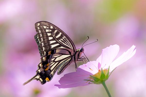 9月に写した蝶の写真_d0001300_22020834.jpg