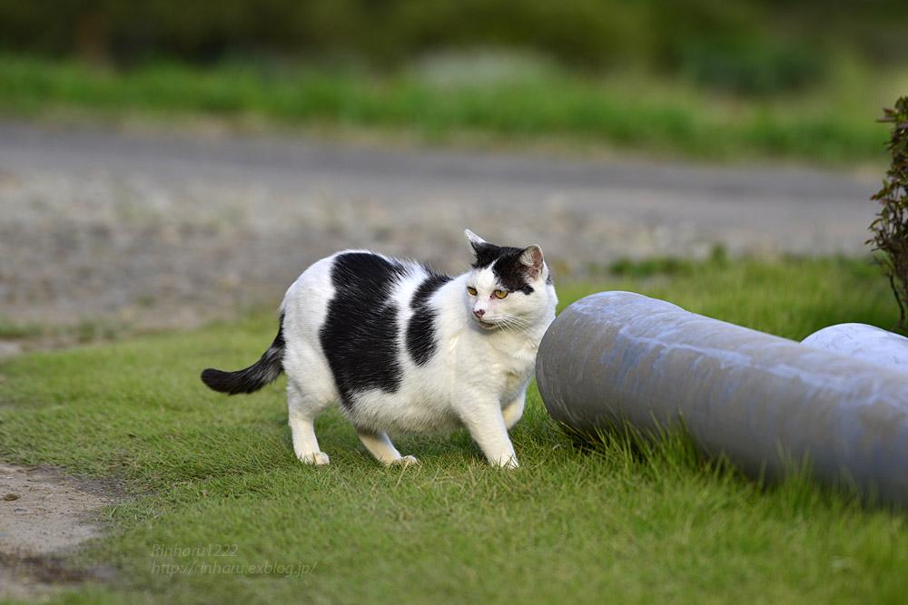 2017.10.1 我が家の猫☆とらたろう、まお、ましゅう_f0250322_2018724.jpg