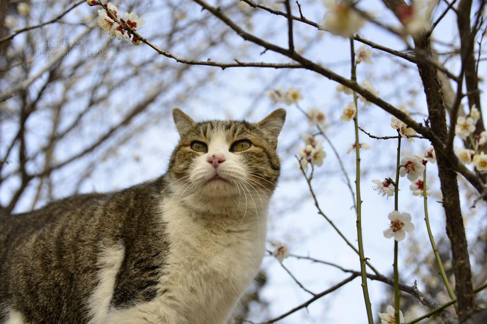 2017.10.1 我が家の猫☆とらたろう、まお、ましゅう_f0250322_20455669.jpg