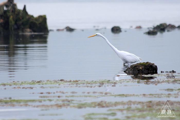 566 Tung Chung Bay ~鳥のエキスパートと回る香港の干潟~_c0211532_19262597.jpg