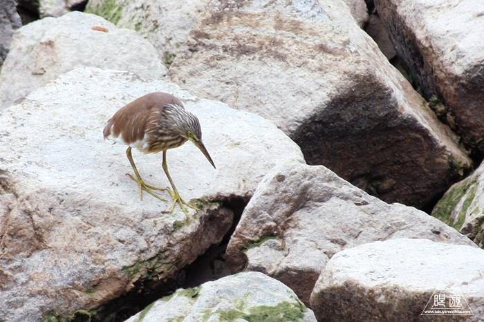 566 Tung Chung Bay ~鳥のエキスパートと回る香港の干潟~_c0211532_20270755.jpg