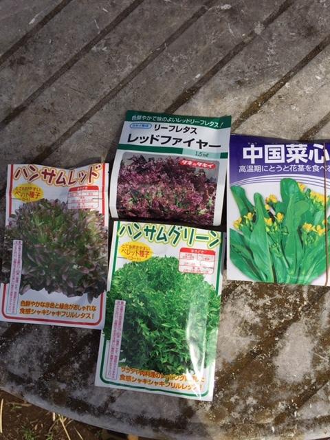 毎日 播種です 今日はレタスを中心にアスパラ菜の追い播きです_c0222448_14265894.jpg