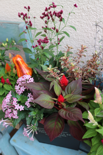 秋の花苗販売のお知らせ♪_e0086738_16260537.jpg