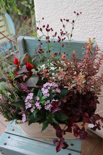 秋の花苗販売のお知らせ♪_e0086738_16260777.jpg