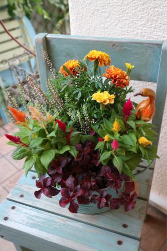 秋の花苗販売のお知らせ♪_e0086738_16260950.jpg