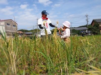 今年の稲刈り_e0010955_06284855.jpg