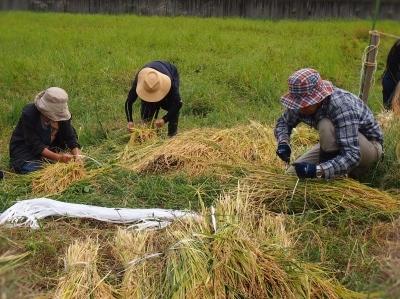 今年の稲刈り_e0010955_06290546.jpg