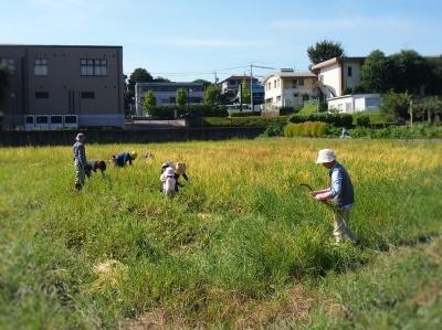 今年の稲刈り_e0010955_06465880.jpg