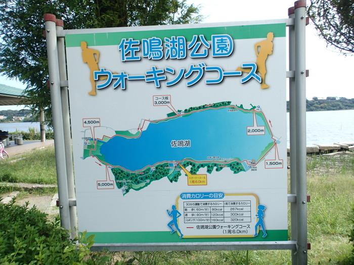 佐鳴湖さんぽ。_c0197578_11173154.jpg
