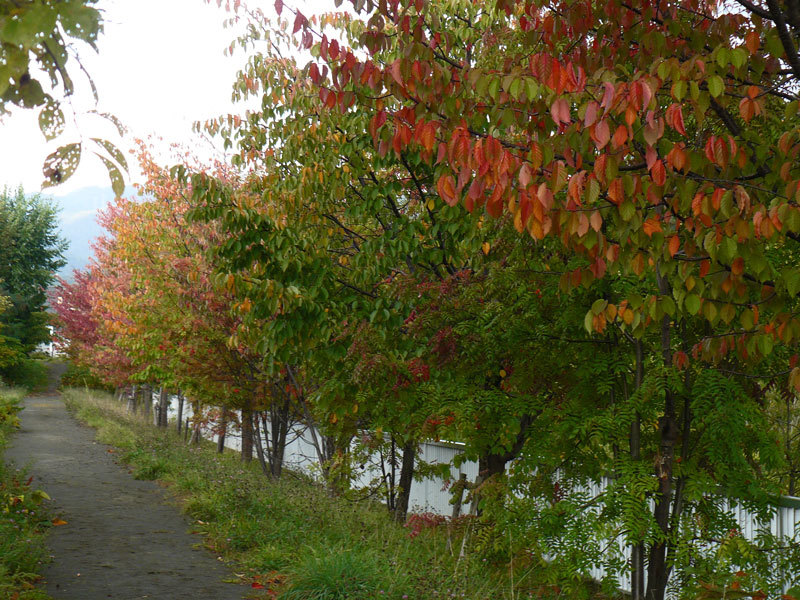 川沿いの紅葉_d0162994_08223928.jpg