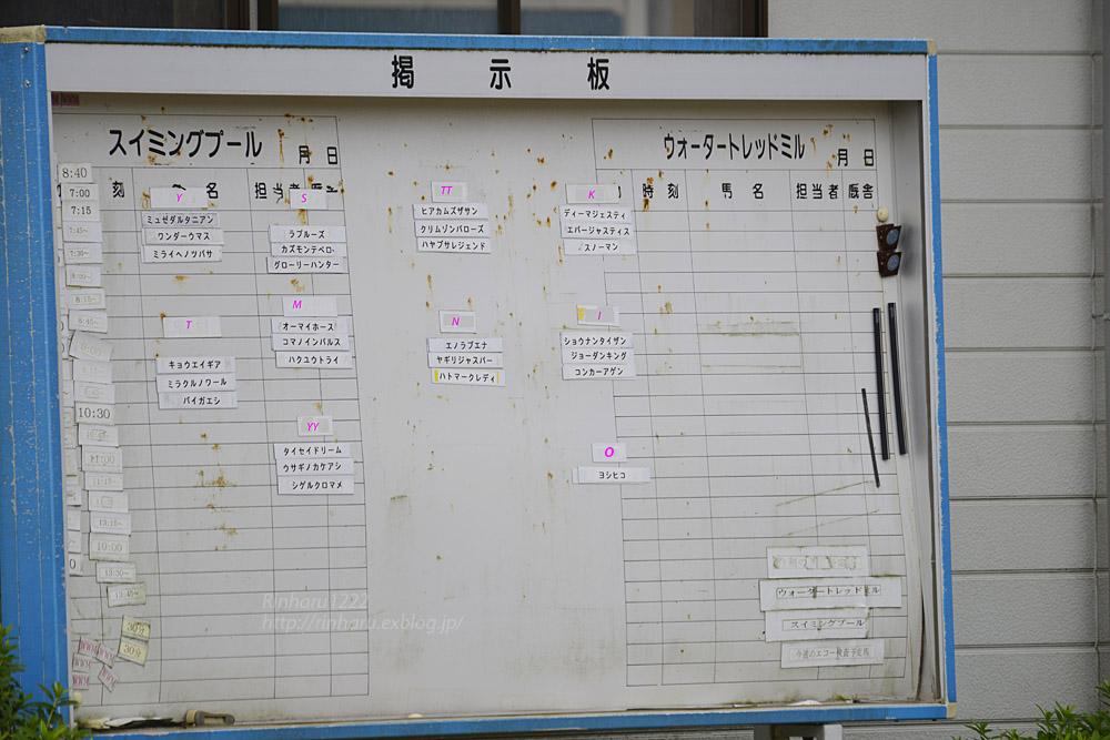 2017.9.16&22【合併号】競走馬リハビリセンター(馬の温泉)_f0250322_2118643.jpg