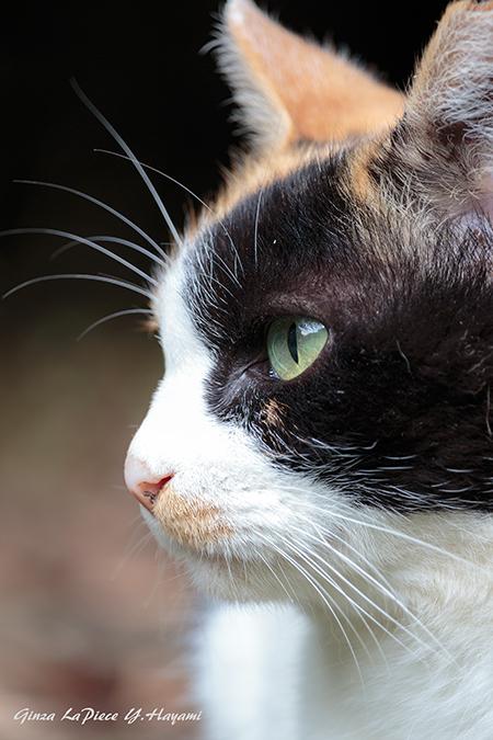 猫のいる風景 三毛ちゃんの横顔_b0133053_00462306.jpg